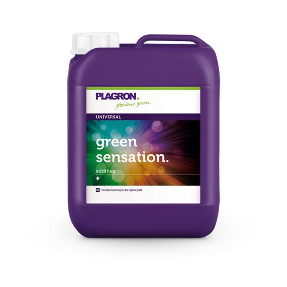 green-sensation_567x567px