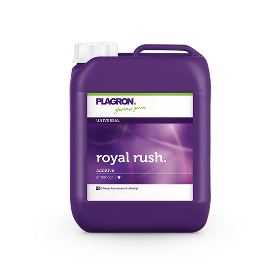 image-008-Royal-Rush